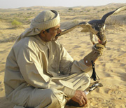 Middle East Falconry
