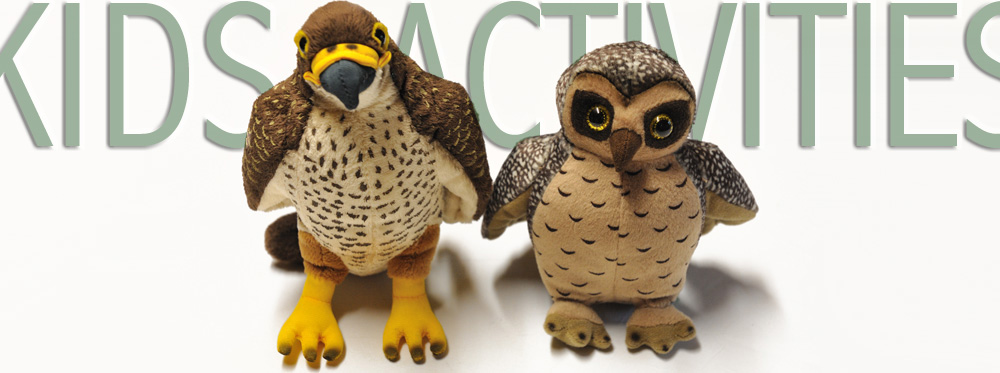 morepork and falcon kids activities