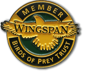 Wingspan membership pin